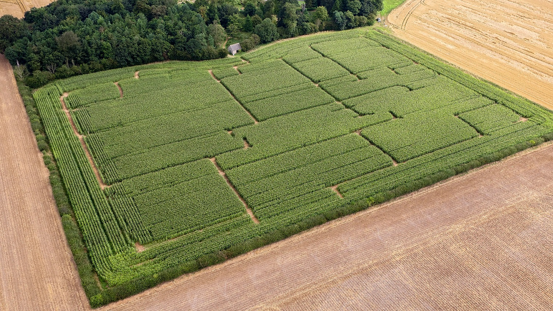 Maize Maze 2016