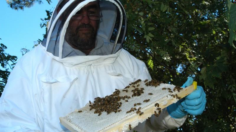 Croft Apiaries Honey
